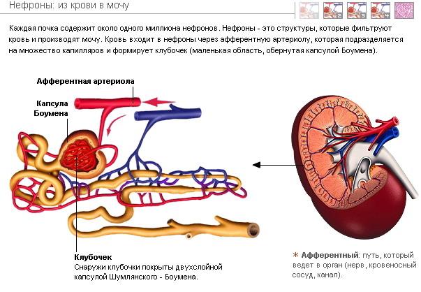болезнь угроза Алкогольная болезнь печени - «ГЕПАТИТ.РУ»